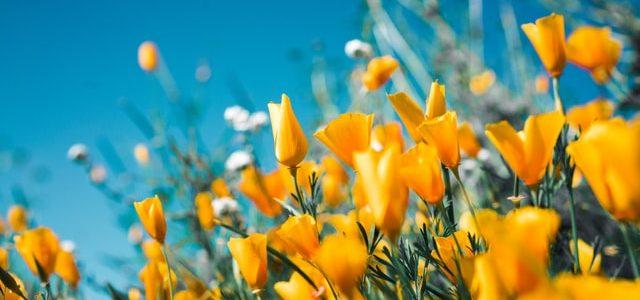 De lente komt eraan! (deel 2)
