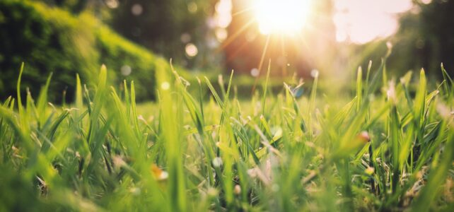 Van winterenergie naar lente-energie